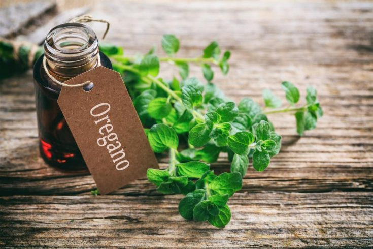 oregano essential oils for warts