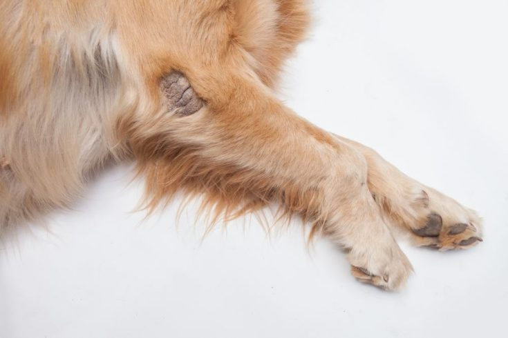 home remedies for mange in dog
