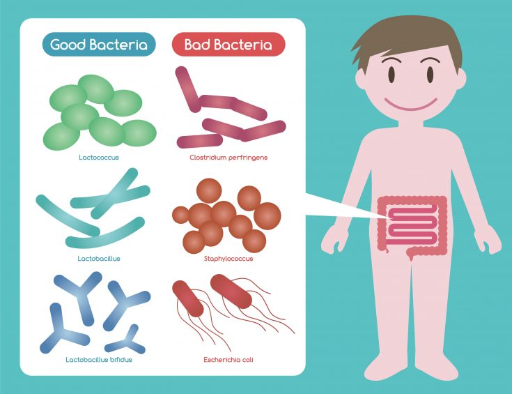 Good bacteria and bad bacteria