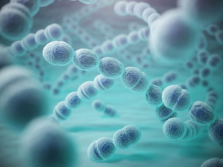Streptococcus is a Gram-positive bacterium